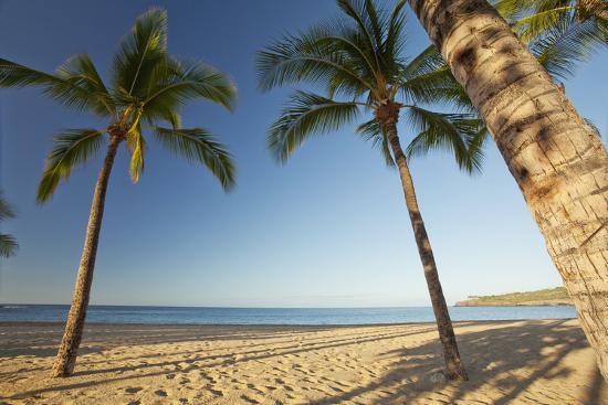 Hawaii, Lanai, Hulopoe Beach, Tall Palm Trees on a Beautiful Beach-Design Pics Inc-Photographic Print