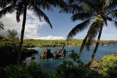 Hawaii, Maui, a Sunny View of Waianapanapa from Behind Palm Trees-Design Pics Inc-Photographic Print