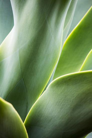 Hawaii, Maui, Agave Plant with Fresh Green Leaves-Terry Eggers-Photographic Print