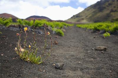 Hawaii, Maui, Haleakala, the Hiking Trail Through the Volcanic Crater-Design Pics Inc-Photographic Print