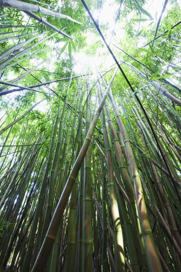 Hawaii, Maui, Hana, a Path Through Green Bamboo-Design Pics Inc-Photographic Print