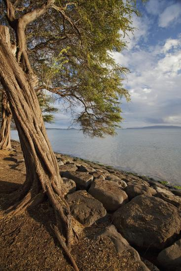 Hawaii, Maui, Kihei, a Kiawe Tree at Sunset-Design Pics Inc-Photographic Print