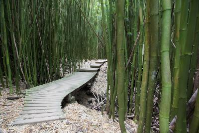 Hawaii, Maui, Kipahulu, Haleakala National Park, Trail Through Bamboo Forest on the Pipiwai Trail-Design Pics Inc-Photographic Print