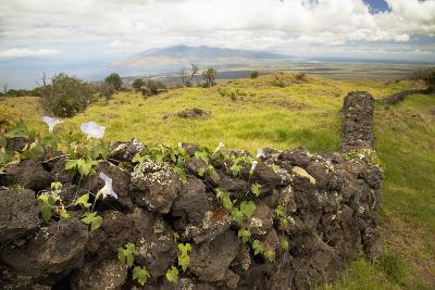 Hawaii, Maui, Kula, a Stone Wall Lines a Country Road-Design Pics Inc-Photographic Print