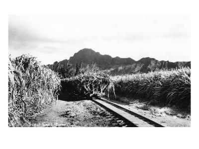 Hawaii - Sugar Cane Field on Kauai Island-Lantern Press-Art Print