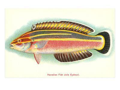 Hawaiian Fish, Julis Eydouxi--Art Print