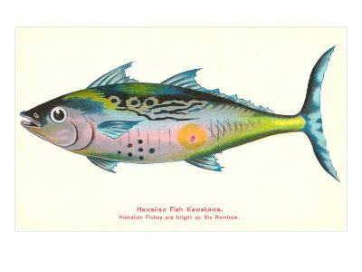 Hawaiian Fish, Kawakawa--Art Print