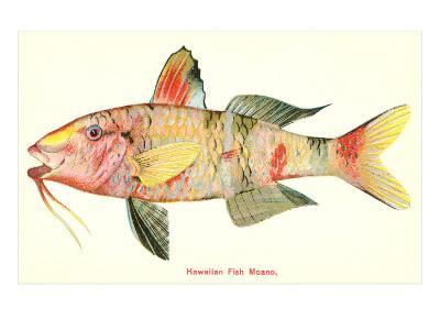 Hawaiian Fish, Moano--Art Print