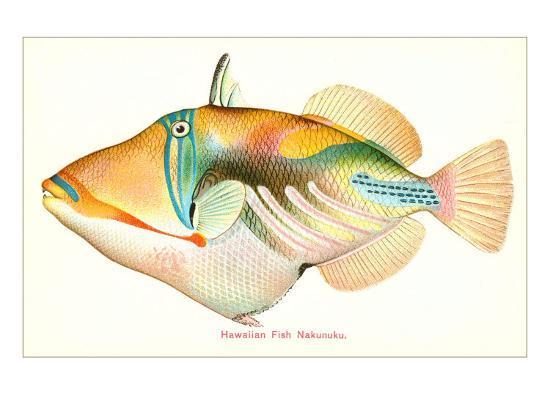 Hawaiian Fish, Nakunuku--Art Print