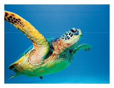 Hawaiian Green Sea Turtle-Theresa Young-Giclee Print