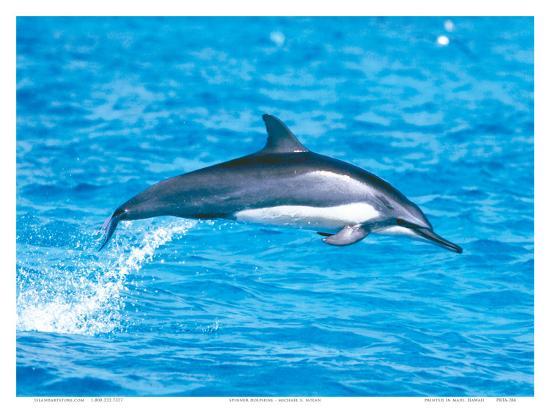 Hawaiian Spinner Dolphins-Michael S^ Nolan-Art Print