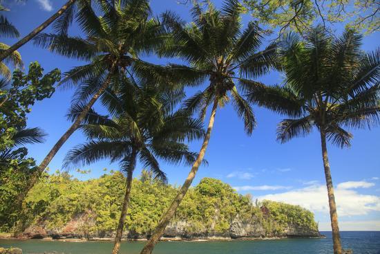 Hawaiian Tropical Botanical Gardens, near Hilo, Big Island, Hawaii, USA Palm trees.-Stuart Westmorland-Photographic Print