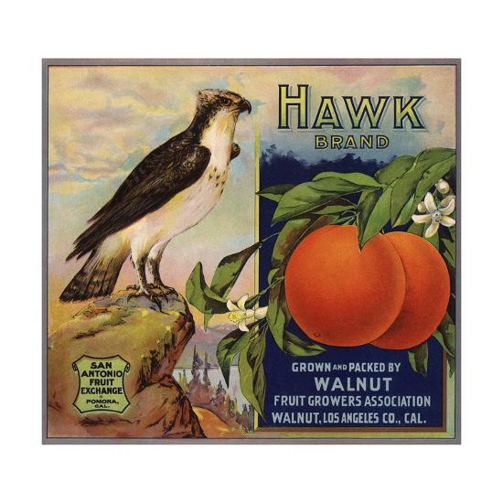 Hawk Brand - Walnut, California - Citrus Crate Label-Lantern Press-Art Print