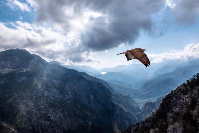 Hawk Flying over the Mountains-muratart-Photographic Print