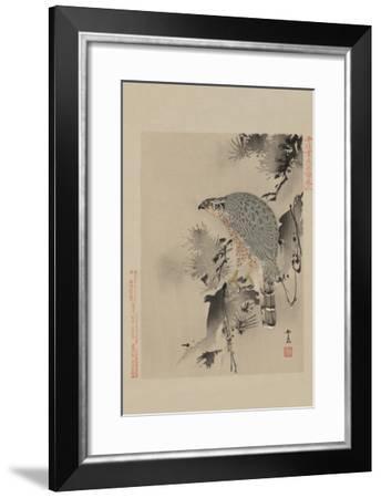 Hawk--Framed Art Print