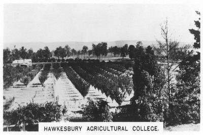 Hawkesbury Agricultural College, New South Wales, Australia, 1928--Giclee Print