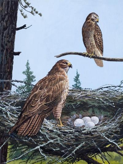 Hawks Nest--Giclee Print
