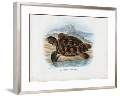 Hawksbill Sea Turtle, 1863-79-Raimundo Petraroja-Framed Giclee Print