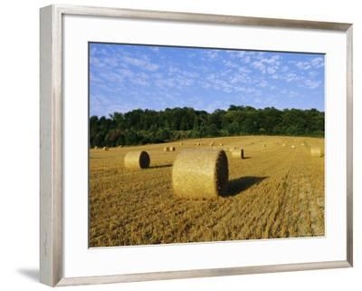 Hay Bales in a Field in Late Summer, Kent, England, UK, Europe-David Tipling-Framed Photographic Print