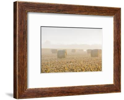 Hay bales in field on foggy morning, Marion County, Illinois-Richard & Susan Day-Framed Photographic Print