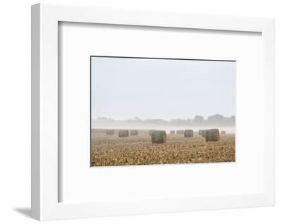 Hay bales in field on foggy morning. Marion County, Illinois.-Richard & Susan Day-Framed Photographic Print