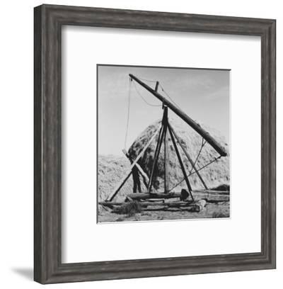 Hay Derrick-Dorothea Lange-Framed Art Print
