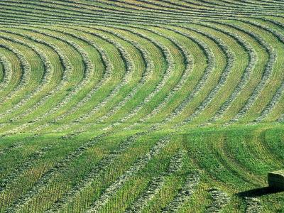 Hay Patterns near Bozeman, Montana, USA-Chuck Haney-Photographic Print
