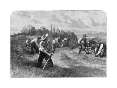 Haymaker, 1875-W Hollidge-Giclee Print