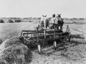 Haymaking in Canada