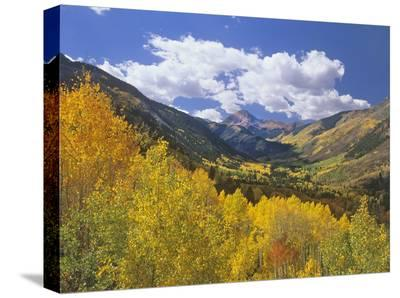 Haystack Mountain with aspen forest, Maroon Bells-Snowmass Wilderness, Colorado-Tim Fitzharris-Stretched Canvas Print
