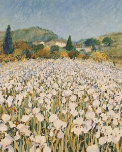 Farm Near Guillaumes by Hazel Barker