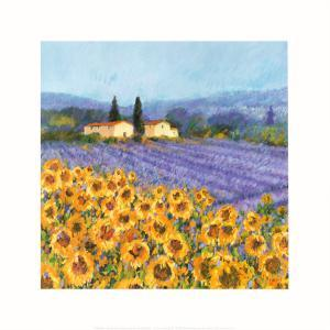 Lavender and Sunflowers, Provence by Hazel Barker
