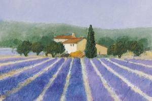 Lavender Field Near St Tropez by Hazel Barker