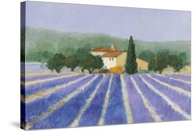 Lavender Field Near St Tropez