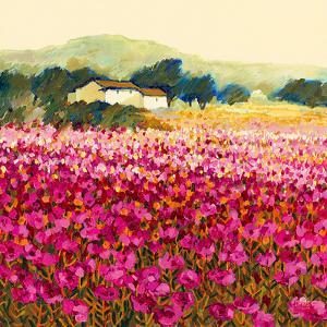 Le Jardin Rouge, Provence by Hazel Barker