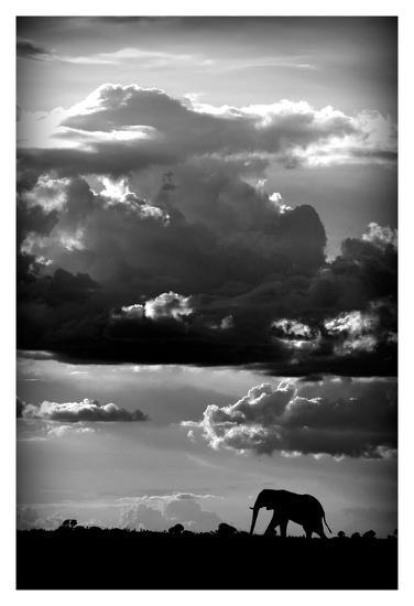 He walks under an African Sky-WildPhotoArt-Art Print
