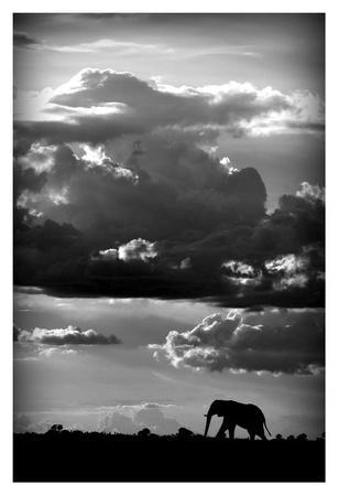 https://imgc.artprintimages.com/img/print/he-walks-under-an-african-sky_u-l-f8wfa40.jpg?p=0