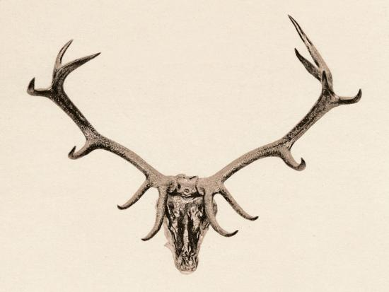 'Head of a Deer', c16th century, (1904)-Unknown-Giclee Print