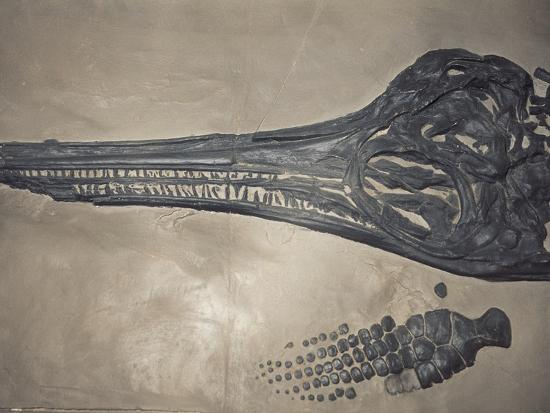 Head of a Jurassic Icthyosaur Fossil-Kevin Schafer-Photographic Print