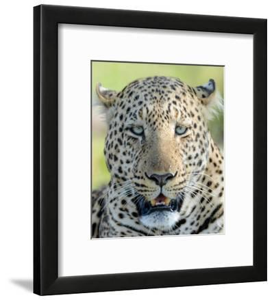 Head of a Leopard-Martin Fowkes-Framed Giclee Print