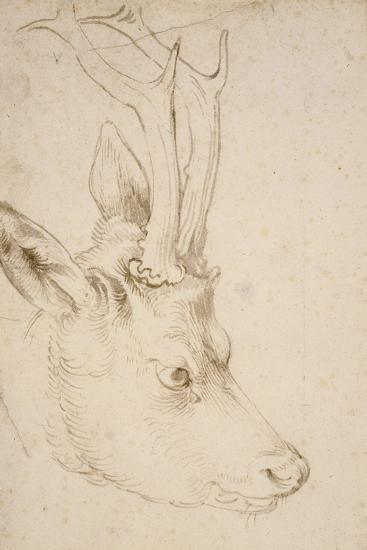 Head of a Roebuck, 1503-Albrecht D?rer-Giclee Print