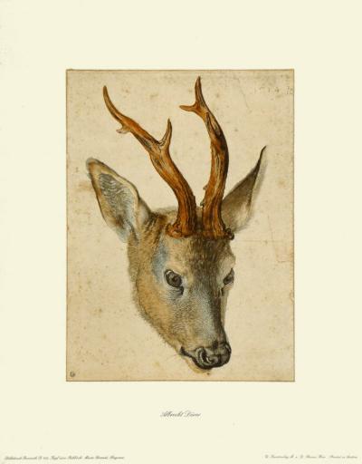 Head of a Roebuck-Albrecht D?rer-Collectable Print