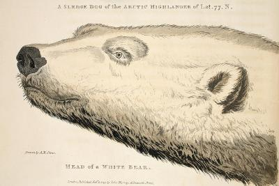Head of a White Bear, Illustration from 'A Voyage of Discovery...', 1819-Andrew Motz Skene-Giclee Print