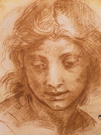 https://imgc.artprintimages.com/img/print/head-of-a-young-woman-drawing-by-andrea-del-sarto-uffizi-gallery-florence_u-l-p12gpj0.jpg?p=0