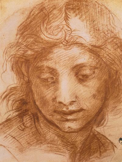 Head of a Young Woman, Drawing by Andrea Del Sarto, Uffizi Gallery, Florence-Andrea del Sarto-Giclee Print