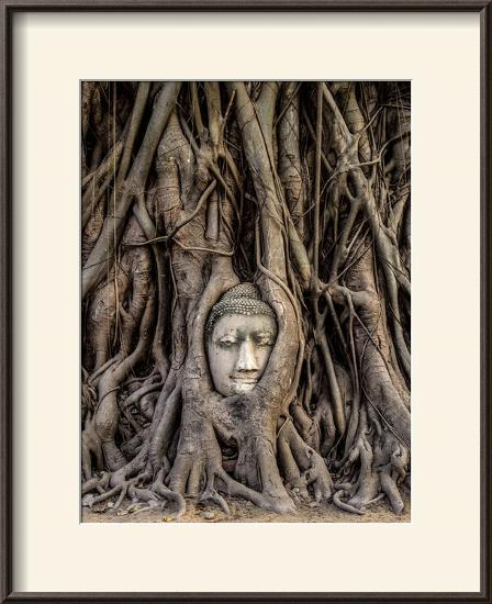 Head of Buddha Statue in the Tree Roots, Ayutthaya, Thailand-R M Nunes-Framed Photographic Print
