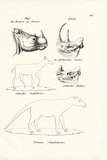 Head of Sumatra-Rhinoceros, 1824-Karl Joseph Brodtmann-Giclee Print