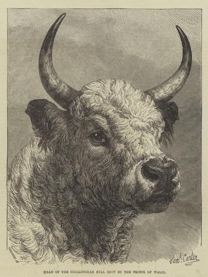 Head of the Chillingham Bull Shot by the Prince of Wales-Samuel John Carter-Giclee Print