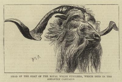 Head of the Goat of the Royal Welsh Fusiliers, Which Died in the Ashantee Campaign-William Edward Atkins-Giclee Print
