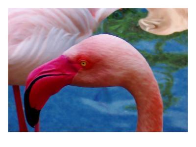 Headsup of Flamingo Bird-Rich LaPenna-Giclee Print